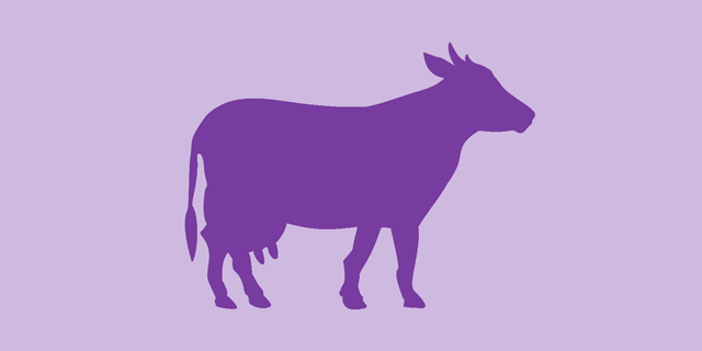 Purple Cow Theory